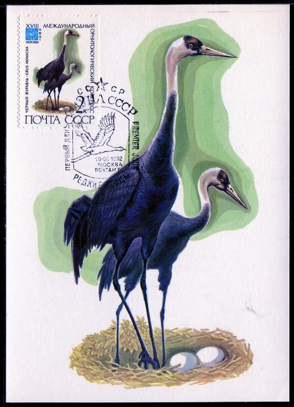 鶴科鳥類嘴長、頸長、腿也長;可分四属15種,分為鶴亞科(Grainae)和冕鶴亞科(Balearicinae),除南美、南極外分布世界各大陸 ,並以東亞為多。鶴亞科後趾小而高, 不能和前三趾對握,因此不能在樹上棲息。鶴属有十種,中國有八種分布,且均属保育鳥類。鶴在中國文化中有崇高地位,尤其丹頂鶴,是長壽、吉祥、高雅的象徴,常與神仙並提故又名仙鶴。   美洲鶴 Grus americana (Whooping Crane)   北美最高的鳥,棲息在北美針樹林的沼澤,在野外的平均壽命為22~24年