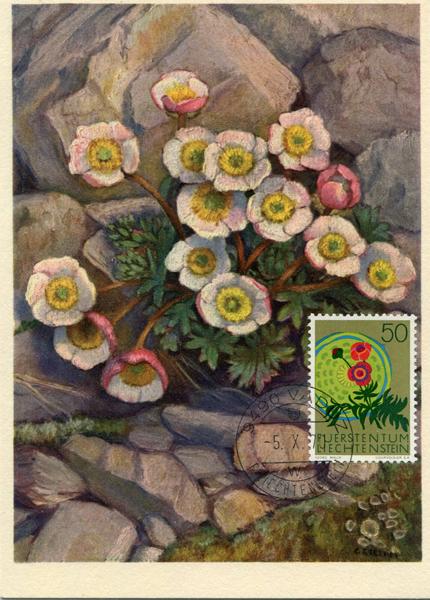 双子叶植物ー毛莨科 (ranunculaceae)